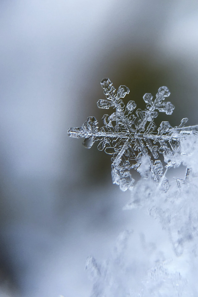 Schneeflocke Nahaufnahme