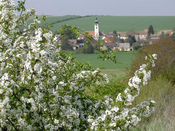 Hüttendorf bei Mistelbach mit Kirche von oben