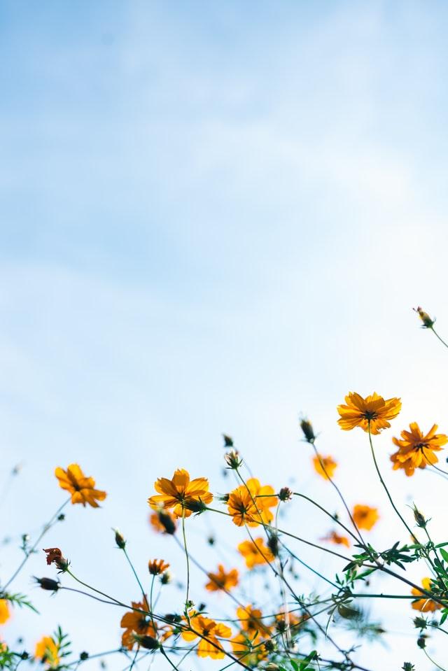 Frühlingsblumen mit Himmel