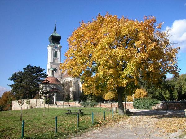 Pfarrkirche Mistelbach mit Karner von außen