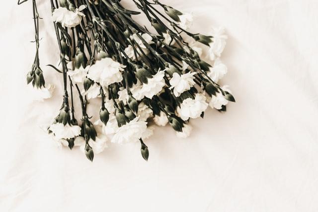 Weiße Blumen vor weißem Hintergrund